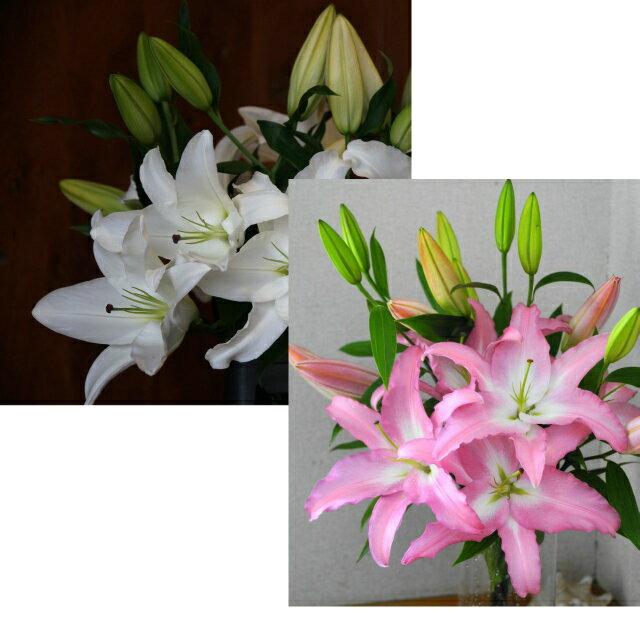 母の日に!大輪の百合おまかせ5本花束