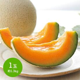 【 送料無料 】【 贈答品 】 北海道 メロン 赤肉 1個 約1.3kg めろん 果物 フルーツ Q10-7 プレゼント スイーツ セット 花以外 2019 お中元