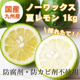 国産とれたて九州夏レモン(佐賀県産) 特選品 1kg 防腐剤・防かび剤不使用 ノーワックス