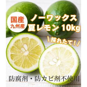 国産とれたて九州夏レモン(佐賀県産) 特選品 10kg 防腐剤・防かび剤不使用 ノーワックス