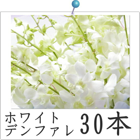 ホワイトデンファレ30本洋蘭(白)◎【激安】【ご自宅用】【RCP】02P01Oct16