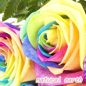 レインボーローズ 1本から購入OK 11本以上の購入で基本送料無料 オランダ産  誕生日 お祝い 花 フラワー 結婚記念日 お礼 レインボーバラ 無限の可能性 虹色のバラ バラ