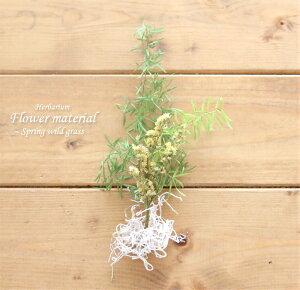 【ハーバリウム キット】ハーバリウム 花材 セット1本分(若草) グリーン 植物 緑 自然 手作りキット プレゼント オリジナル 植物標本 手作り 初心者 プリザーブド ドライフラワー 誕生日