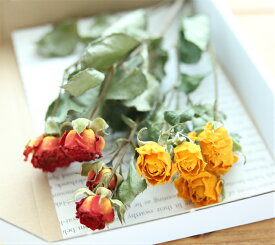 AFドライ・スプレーローズ2色セット (イエロー&オレンジ系) 【小分け 少量 ドライフラワー ドライローズ バラ 母の日 結婚 お花 フラワー 】