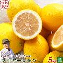 三ヶ日産マイヤーレモン5kg A品【静岡県三ケ日外山農園・送料無料】