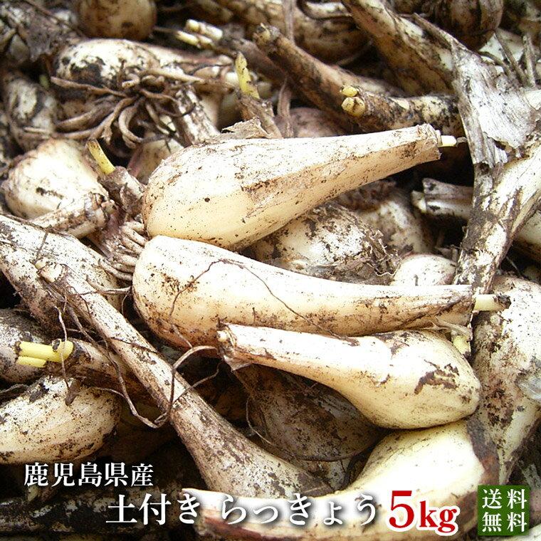 らっきょう5kg・鹿児島県産(国産)農薬・化学肥料不使用・無農薬・砂付き(泥つき)【送料無料】