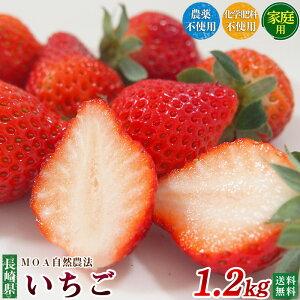 長崎県産 農薬・化学肥料不使用 いちご 1.2kg【家庭用】自然農法【送料無料】無農薬イチゴ