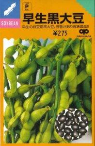 【種】 早生黒大豆(枝豆) 40ml 1袋 (郵便配送商品)