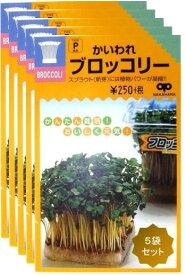 【種】 スプラウト かいわれブロッコリー 種35ml 5袋セット (郵便配送商品)