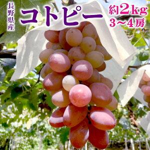 シャインマスカットから生まれた期待の新品種! 種なし コトピー 約2kg (3〜4房入り) 希少品種 皮ごと ぶどう 長野県産 産地直送 旬の果物 送料無料:c38