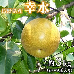 梨 幸水 約3kg (6〜9玉入り) 長野県産 産地直送 朝獲れ 旬の果物 大容量 フルーツ 果物 送料無料:c23