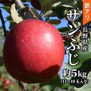 訳あり!長野県産 サンふじ 約5kg 11〜18玉入り りんご 産地直送 林檎 リンゴ アップル 訳有 訳アリ わけあり フルーツ 旬の果物 大容量 ふじりんご さんふじ 送料無料:c32