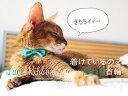 necono 猫の首輪 『Luce Ribbon』 -ルーチェ リボン-  10-30cm 安全 セーフティ首輪 軽量 ストレッチ 日本製 全5色