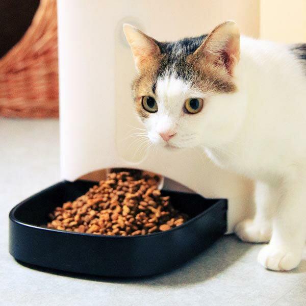 【ネコリパ会員】毎月30000円保護猫活動に!毎月ネコリパブリックの可愛いポストカードが届きます! 保護猫活動の助けになります!殺処分ゼロに向けて新しい猫助けの形!(メール便でのお届けのため、代金引換不可)(GIFU)