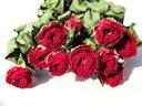 ドライフラワー花材 SPバラ・エスペリア