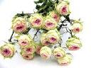 ドライフラワー花材 SPバラ・ストロベリーミルフィーユ