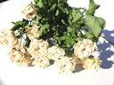 ドライフラワー花材 SPバラ・グリーンアイス