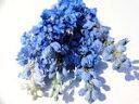 ドライフラワー花材 デルフィニューム・ライトブルー