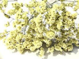 ドライフラワー花材 HBスターチス・きゃめる(八重咲)