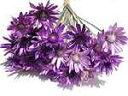 ドライフラワー花材 キセランセマム・紫