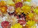 ドライフラワー花材 ヘリクリサム・ヘッド(100個入り)