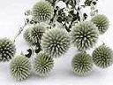 ドライフラワー花材 ルリタマアザミ