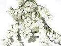 ドライフラワー花材スターチス・白