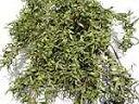 ドライフラワー花材 キンポウジュ