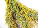 ドライフラワー花材 ミモザアカシア