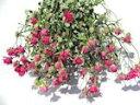 ドライフラワー花材 SPバラ・スモールウッド・ピンク