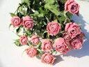 ドライフラワー花材 SPバラ・リディア