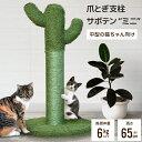 【マラソンポイント10倍】 爪とぎ 支柱 サボテン MINI 爪とぎ 支柱 キャットタワー Stadium 猫 猫のおもちゃ キャット…