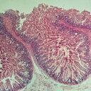 ケニス 解剖組織 プレパラート 20種類 各1枚 (1-157-0045) 動物の体の様々な組織の構造を顕微鏡観察しよう!! ※お取り…