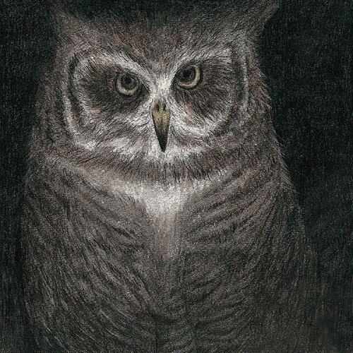 フクロウの声が聞こえる [完全生産限定盤/7インチサイズ紙ジャケット仕様][CD] / 小沢健二とSEKAI NO OWARI