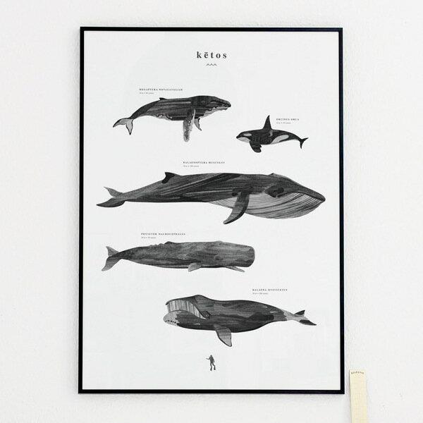 Coco Lapine Design KETOS アートプリントポスター 50x70cm モノクロ ベルギー/ドイツ