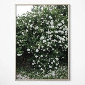 Fine Little Day ROSES ポスター 70x100cm ファインリトルデイ 北欧 スウェーデン