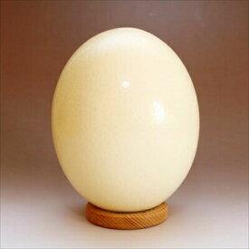 国産 ダチョウの卵 食用 約1.3kg オーストリッチ たまご エッグ だちょうの卵 調理