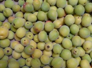 無農薬 南高梅 規格外品 大分県産 10kgサイズはL〜3L 混在