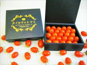 高級手詰め フルーツトマト タイヨウのトマト 化粧箱入り トマト 特選 クリスマス