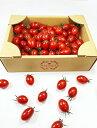高級手詰め フルーツトマト 「タイヨウのトマト」 お得な ご自宅用 1kg箱 特選