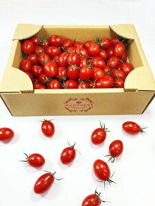 高級手詰め フルーツトマト タイヨウのトマト お得な ご自宅用 1kg箱 トマト