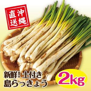 【送料無料】 沖縄県産 島らっきょう(土付き) お得な2KG /シャキシャキ美味しく香りも豊か! 土付きなので新鮮長持ち!!