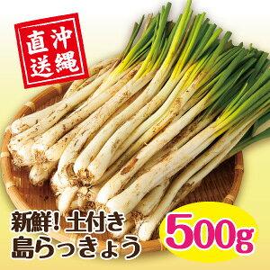 沖縄県産 島らっきょう(土付き)500g /シャキシャキ美味しく香りも豊か! 土付きなので新鮮長持ち!!