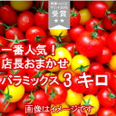 【送料無料】【御歳暮】【クリスマス】数種類のトマトが入った『店長おまかせ バラミックス(パックなし)たっぷり3キログラム』品種及び配合につきましては、収穫状況に...