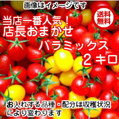【送料無料】【お祝い】【期間限定SALE】当店一番人気!数種類のトマトが入った『店長おまかせ バラ(パックなし)ミックス』とってもお得な2キログラム今だけ2,700円(税込)品種及び配合につきましては収穫状況により変わります