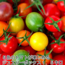 ミニトマト トマト 新鮮 プレゼント 条件付き送料無料 5色のトマトが入ったジュエリーボックス(パックなし)1.5キロ お入れする品種配分は収穫状況により変わります