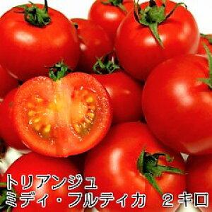トマト ミディトマト 新鮮 生産者直送 宅配便なら全国送料無料  ミディ・フルティカ バラ(パックなし)2キロ 甘味と酸味旨みのバランスがよくフルーティな「フルティカ」です