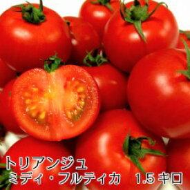 トマト ミディトマト 新鮮 条件付き送料無料ミディ・フルティカ バラ(パックなし)1.5キロ 3200円(税込)フルーティでジューシーな「フルティカ」中玉品種です