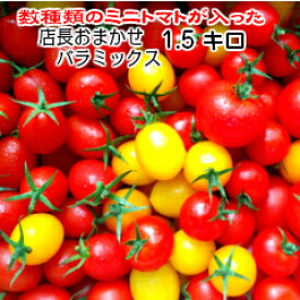 トマト ミニトマト 父の日 新鮮 生産者直送 宅配便なら全国送料無料  数種類のトマトが入った『店長おまかせバラ(パックなし)ミックス』1.5キログラム2,700円お入れする品種・配分は店長にお任せください
