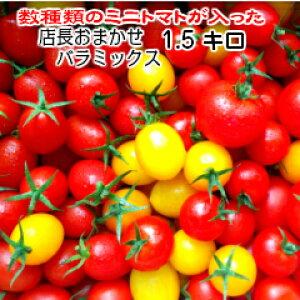トマト ミニトマト ホワイトデー 新鮮 生産者直送 宅配便なら全国送料無料  数種類のトマトが入った『店長おまかせバラ(パックなし)ミックス』1.5キログラム2,700円お入れする品種・配